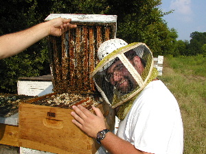 russian bees, russian bees for sale - photo#2