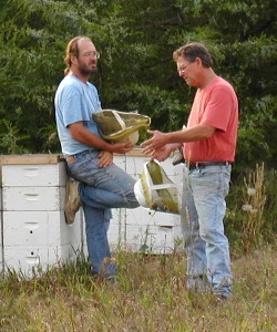 russian bees, russian bees for sale - photo#6